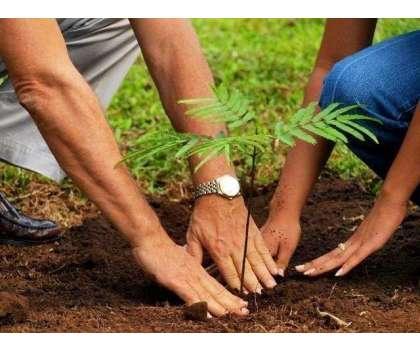 ْوزیراعظم کے 10 بلین ٹری سونامی منصوبے کو اقوام متحدہ ماحولیاتی تبدیلی ..