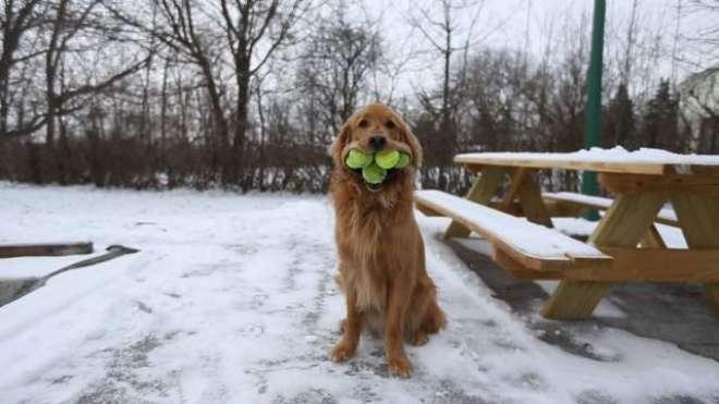 نیویارک کا یہ کتا اپنے منہ میں ایک ساتھ 6 ٹینس بالز سنبھال سکتا ہے