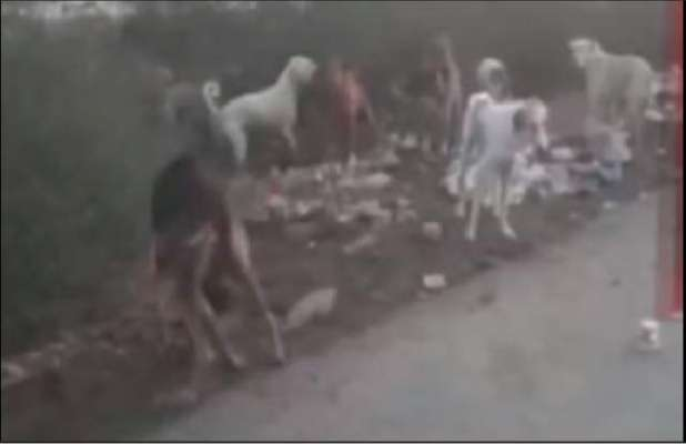 فیصل آباد میں ایک ماہ کی بچی کو کتوں نے نوچ ڈالا