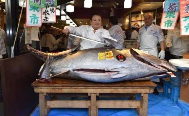 276 کلوگرام وزنی مچھلی کی قیمت  28 کروڑ روپے