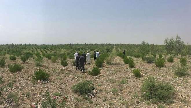 نیب نے پاکستان تحریک انصاف کے بلین ٹری سونامی منصوبے میں کرپشن کے مقدمات ..