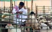 چار سو ارب روپے کے جانوروں کی قربانی، معیشت کو سہارا ملے گا؟
