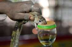 دنیا بھر میں سانپ کے زہر کی فروخت بڑھ گئی،قیمت لاکھوں میں