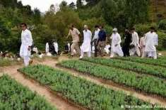 پاکستان کی طرف سے ماحول دوست توانائی کا عزم، حقیقیت پر مبنی یا محض ایک ..