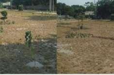 فیصل آباد شہر کی گنجان آباد شاہراؤں میں دو نئی گرین بیلٹس قائم کر دی ..