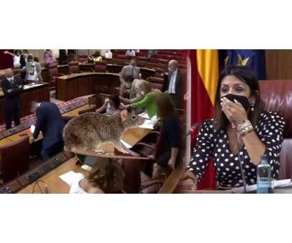 سپین کی پارلیمنٹ کی کارروائی ایک چوہے کی وجہ سے تعطل کا شکار ،اراکین ..