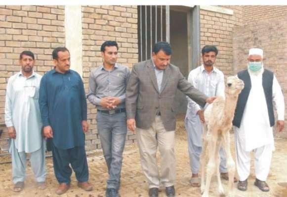 زرعی یونیورسٹی فیصل آباد کے سائنسدانوں نے پاکستان کی تاریخ میں پہلی ..