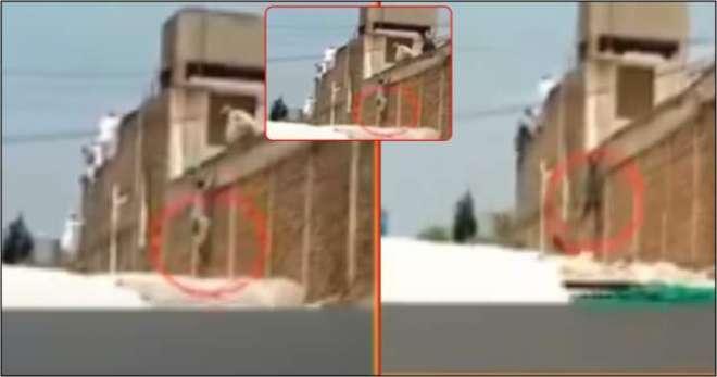 کورونا کے 24 مسافروں کی دیوار پھلانگ کر فرار ہونے کی ویڈیو سامنے آ گئی