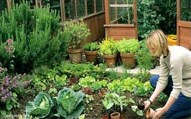 Kitchen Gardening - Article No. 795