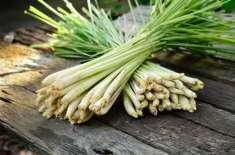 Limn Grass Aur Is Ke Tail Ke Fawaid