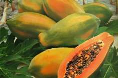 Papaya Khaye Patte K Sath