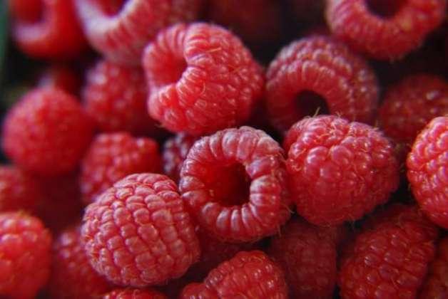 Sehat Bakhash Berries
