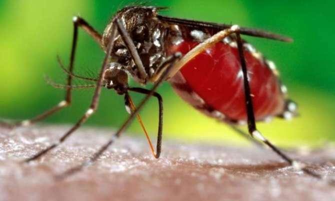 Dengue Machar Se Khoofzada Na HooN
