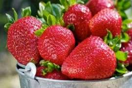 Rus Bhare Strawberry K Faide Buhat