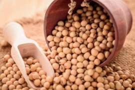Soybean Kiyon Faidamand Hai