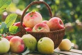 Apple - Hairat Angeez Khoobiyoon Se Bharpoor