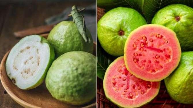 Guava - Article No. 2079