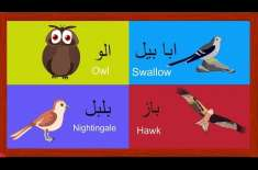 Learn Birds Names For Kids In Urdu