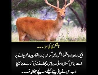 Nashukri Ki Saza, ek din bara singha jungle main ghas char raha tha...