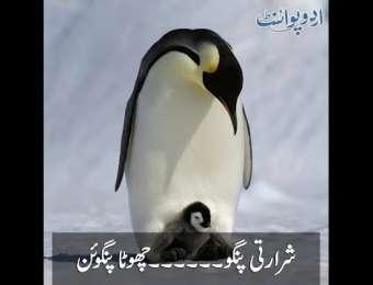 Shararti Pingu chota Penguin, Pingu Bohat Hi Chanchal Aur Shararti Tha...