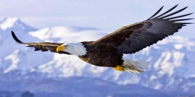 Eagle - Aik Shikari Parinda