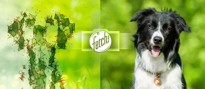 MICROSOFT fetch MATCHES HUMAN FACES TO DOGS