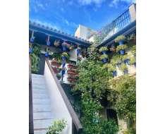 the gorgeous patios of cordoba