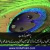 Morr Aur Danishwar - Urdu Story - مور اور دانش ور