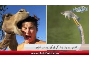 Nuqsan Se Chand Second Qabal Li Gayi Zabardast Tasaweer. Namaloom Afrad 2 Ki Punjab Main Pabandi