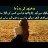 Kids Urdu Story: Darakhton Ki Bad Dua, Danish School Se Ghar Ja Raha Tha Tou Usay Kisi Ki Awaz...