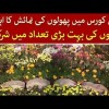 Special Flowers Exhibition Arranged At Jillani Park, Lahore, Watch Special Report