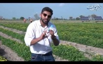 Drip Irrigation  introduced in Pakistan by Nestle and LUMS Students, Special Tour to Fields