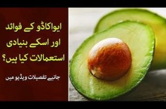 Uses of Avocado and its Benefits, Know Detail with Shadab Abbasi