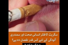 Cigarette Filters Are The Worst Contaminant of Oceans, Details in this Video