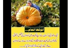 Kids Urdu Story: Anokha Enam, Ek Dafa Ek Kisan Ne Apne Khait Mein Kadu Ki Fasal Ugayi...