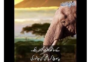 Kids Urdu Story: Dost Wo Jo Museebat Mein Kaam Aye, Kisi Jungle Mein Ek Hathi Rehta Tha...
