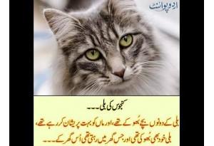 Kids Urdu Story: Kanjoos Ki Billi, Billi K Donon Bache Bhookay Thay Aur Maan Ko Bohat...