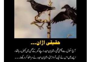 Kids Urdu Story: Hakiki Uran, Shayan Apne Ghar K Sehan Main Khel Raha Tha K Us Ne Ek Awz Suni