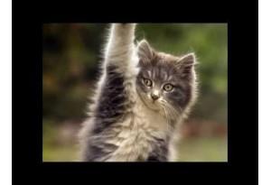 Kids Story: Hoshayar Billi Aur Dushman (Clever Cat And Her Enemy)