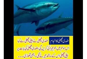 Kids Urdu Story: Zidi Machli Ka Anjaam, Ziddi Machli Ne Peeli Machli Se Kaha Is Mausam...