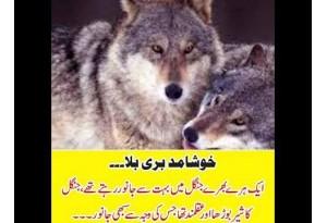 Kids Urdu Story: Khushamad Buri Bala, Ek Hare Bhare Jungle Main Bohat Se Janwar...