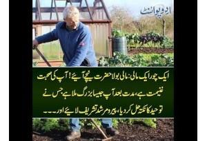Kids Urdu Story: Ek Chor Ek Maali, Maali Bola Hazrat Neechay Aiay, Muddat Baad Aap Jaisa...