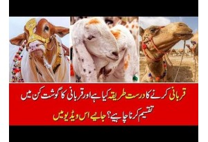 Eid-ul-Azha: Right Way To Sacrifice Animal In Islam, Find Out In This Video