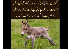 Kids Urdu Story: Noni Ka Karnama, Ghoron Ne Noni Ko Mana Kia K Jungle Mein Na Jao...