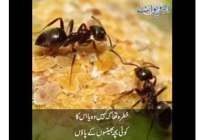 Kids Urdu Story: Burai Ka Jawab, Ek Chiunta Bara Muhabbati Aur Shareef Tha...