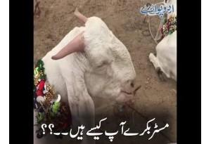 Kids Urdu Story: Mr Bakray Aap Kaise Hain?, Main Ek Din Bakar Mandi K Qareeb Se Guzar Rahi Thi...