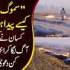 Reason Behind Smog Revealed | Burning Of Crops Causing Air Pollution