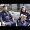 Watch Special Interview Of Lahori Citizen Who Has A Lion As Pet In His Home
