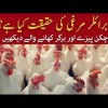 The Reality Of Broiler Chicken. A Must Watch For Pizza And Burger Eaters