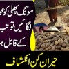How Peanuts Are Cleaned? | Watch How These Poor Women Clean Mongphalis